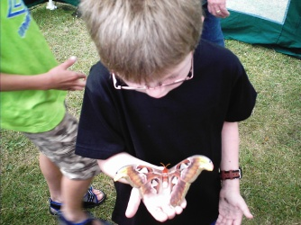 I play in the moth enclosure.