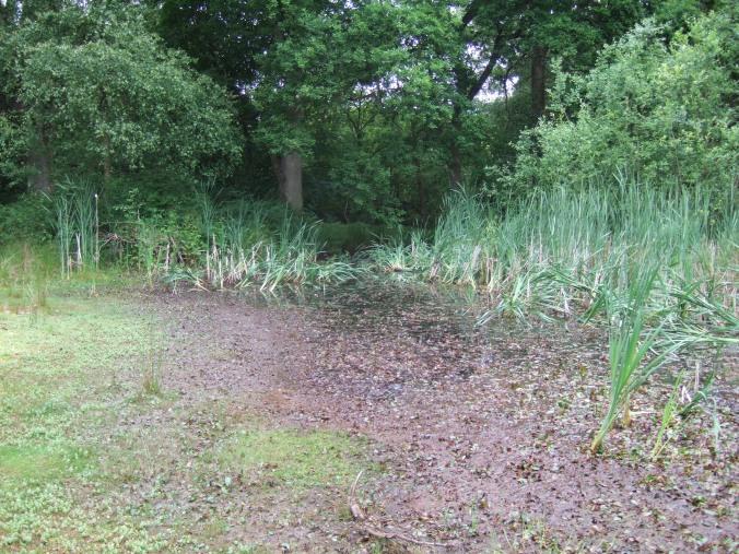 A woodland pond.