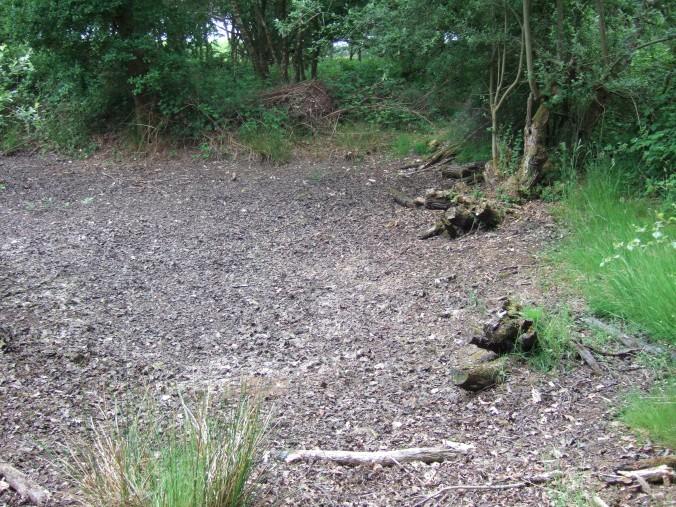 A dry pond.