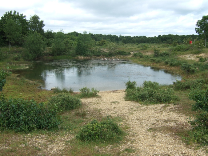 A pond containing several species of newts.