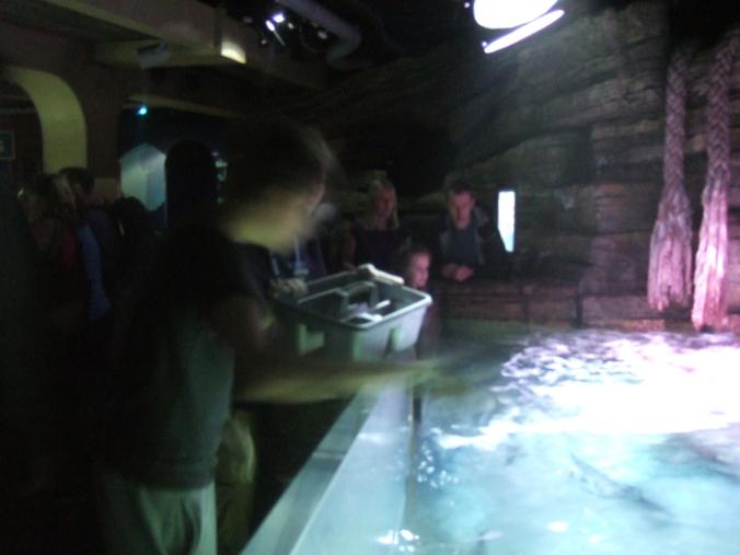 I feed the juvenile tank in the aquarium ray pool.