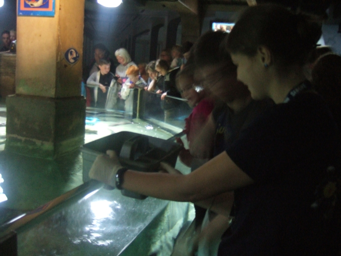 The aquarium staff feed the various denizens of the ray pool.