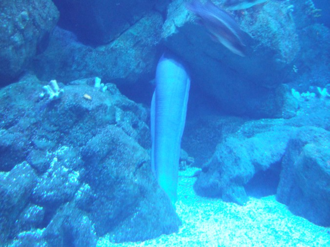 The tail of a huge Conger Eel sticking out of the rocks.
