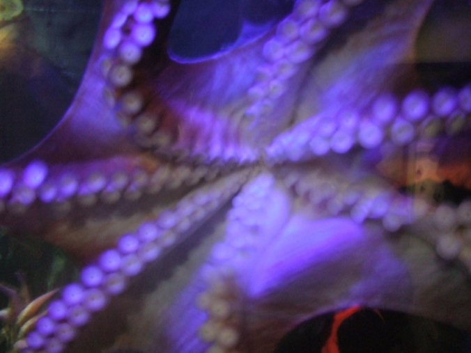 The octopus playfully attacks my camera, perhaps mistaking it for a snack.